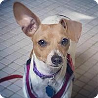 Adopt A Pet :: Freckles - Grayson, KY