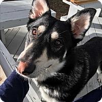 Adopt A Pet :: Bear - Truckee, CA