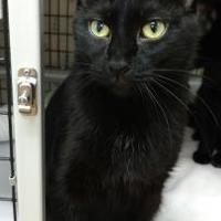 Adopt A Pet :: Mitchell - Decatur, IL