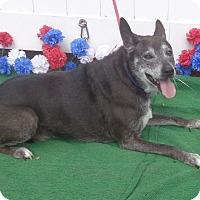 Shepherd (Unknown Type)/Labrador Retriever Mix Dog for adoption in Marietta, Georgia - MILO see also MELODY