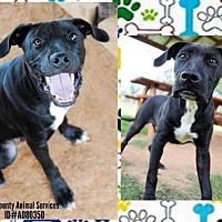 Adopt A Pet :: HARDY - Grovetown, GA
