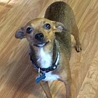 Adopt A Pet :: Tula - Gig Harbor, WA