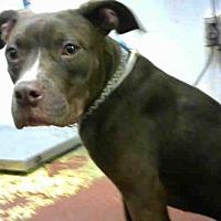 Adopt A Pet :: NISSA - Atlanta, GA