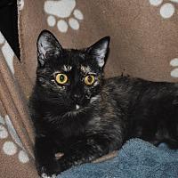 Adopt A Pet :: Lillie - Los Angeles, CA