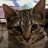 Adopt A Pet :: Cash - Phillipsburg, NJ