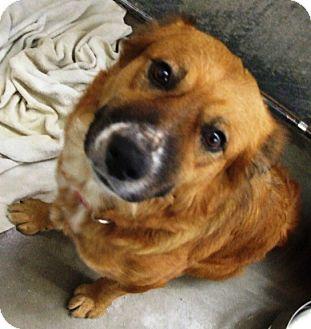 Australian Shepherd Mix Dog for adoption in Kalamazoo, Michigan - Moka