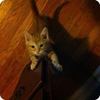 Adopt A Pet :: Moby - St. Louis, MO