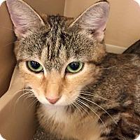 Adopt A Pet :: Mama w/Emerald Eyes - McDonough, GA