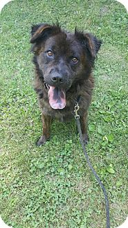 Chow Chow Mix Dog for adoption in South Park, Pennsylvania - Conan