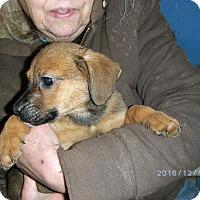 Adopt A Pet :: Ezra - Evensville, TN