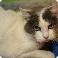 Adopt A Pet :: Trudy - Baton Rouge, LA