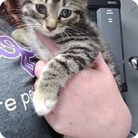 Adopt A Pet :: Syrah - Paducah, KY