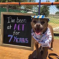 Adopt A Pet :: Casanova - Fresno, CA