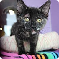 Adopt A Pet :: Pinky - Littleton, CO