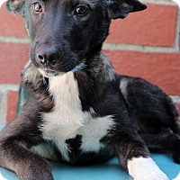 Adopt A Pet :: Leon - Waldorf, MD