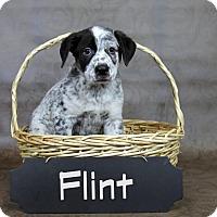 Adopt A Pet :: Flint - Joliet, IL
