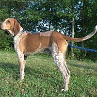 Adopt A Pet :: riley - Staunton, VA