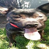 Adopt A Pet :: KING - Salt Lake City, UT