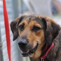 Adopt A Pet :: Murphy - Parma, OH