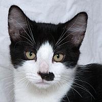 Adopt A Pet :: Rue W - Sacramento, CA