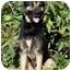 Photo 3 - German Shepherd Dog Mix Dog for adoption in Los Angeles, California - Carrington von Malibu