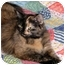 Photo 4 - Domestic Longhair Cat for adoption in Troy, Michigan - Angela & Sissy