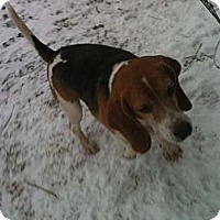 Adopt A Pet :: Dozer - Linton, IN