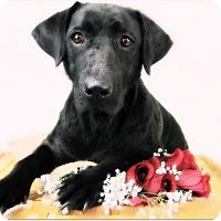 Adopt A Pet :: Kena - Pascagoula, MS