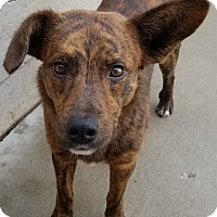 Adopt A Pet :: Barney*ADOPTED!* - Chicago, IL