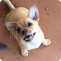Adopt A Pet :: Yoshi - Austin, TX