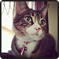 Adopt A Pet :: Patty - Jackson, NJ