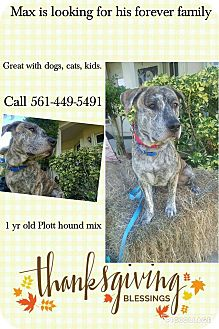 Plott Hound/Catahoula Leopard Dog Mix Dog for adoption in loxahatchee, Florida - Max