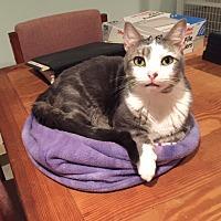 Adopt A Pet :: Taco - Port Republic, MD