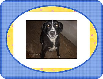 Border Collie Mix Dog for adoption in KELLYVILLE, Oklahoma - JULIE