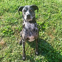 Adopt A Pet :: Cody - Lancaster, KY