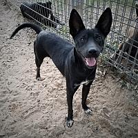 Adopt A Pet :: Baby Girl - Roanoke, VA