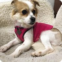 Adopt A Pet :: Cassie - Sherman Oaks, CA