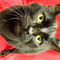 Adopt A Pet :: Butterball - Watauga, TX