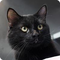 Adopt A Pet :: Strudel - Richmond, VA