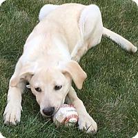 Adopt A Pet :: Easter - Denver, CO