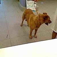 Adopt A Pet :: VIOLA - Rancho Cucamonga, CA