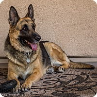 Adopt A Pet :: Jameson - Phoenix, AZ