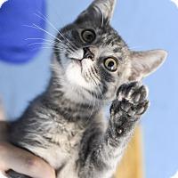 Adopt A Pet :: Texas - Huntsville, AL