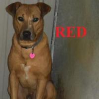 Adopt A Pet :: red - Franklin, NC