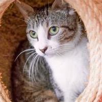 Adopt A Pet :: Wendy - Lihue, HI