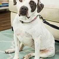Adopt A Pet :: Noel - Hawthorne, CA
