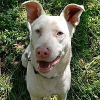 Adopt A Pet :: Pike - Blacksburg, SC