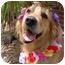 Photo 1 - Golden Retriever Mix Dog for adoption in Bourg, Louisiana - KASEY
