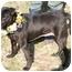 Photo 2 - Labrador Retriever Mix Dog for adoption in Cincinnati, Ohio - Sue