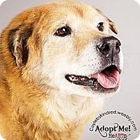 Adopt A Pet :: Buddy - Denver, CO